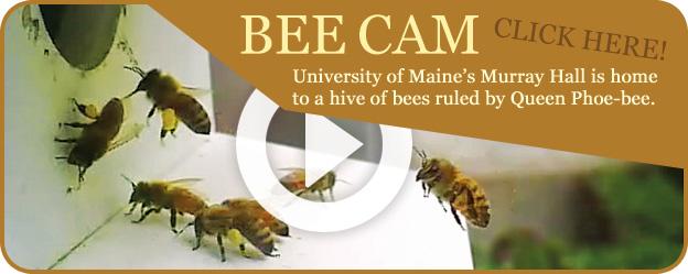 Bee Cam Link