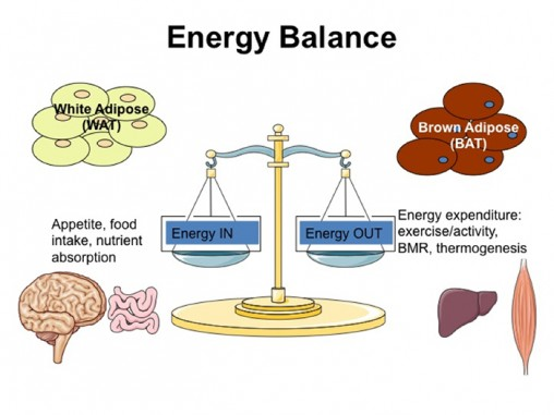determination of energy balance Energy balance is an important indicator that shows the efficiency of production methods and compares them in this article, the energy balance of the sugar beet, which has an important place in the agricultural production of turkey, is calculated for middle anatolia conditions (konya region.