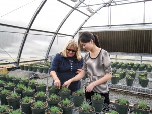 Researchers tending plants