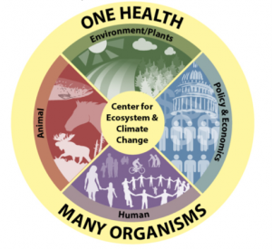 One Health and the Environment Image