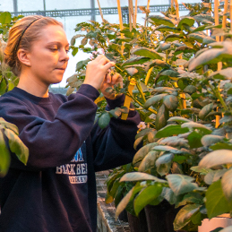 Photo of a student working in the greenhouse for the Minors and Concentrations page