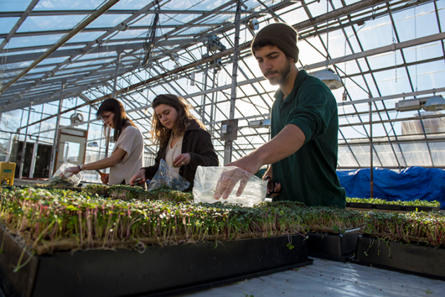 Students working in greenhouse